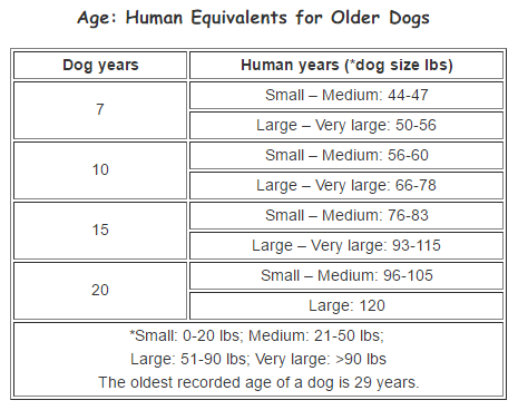 human age equivalents for older dogs