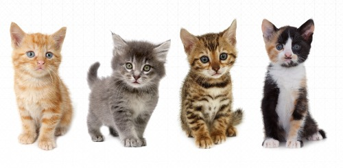 4 kittens - kitten care in Brookfield