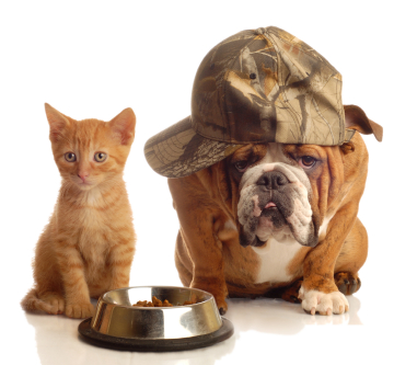 Cat with Dog wearing a hat by a food dish