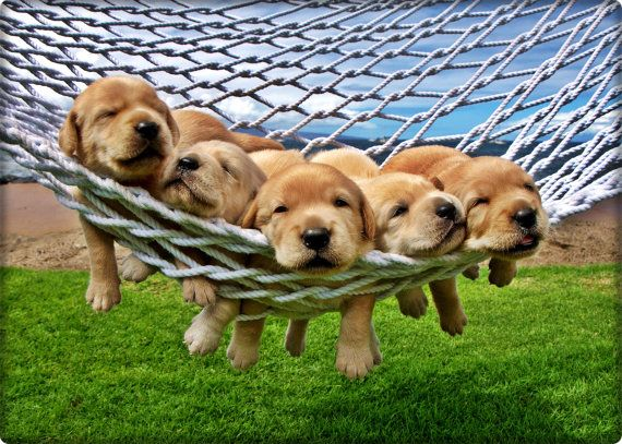 hammock full of puppies in New Berlin, Wisconsin