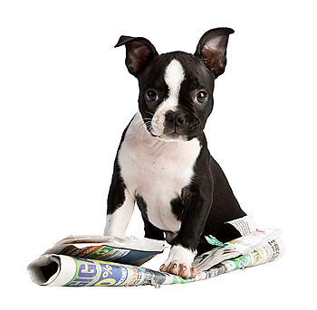 Puppy dog with newspaper